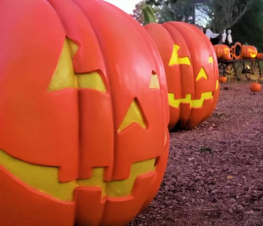 jumbo-pumpkins (2)