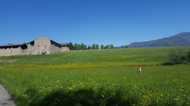 Just walking through a field with a centuries old building and the alps in the background
