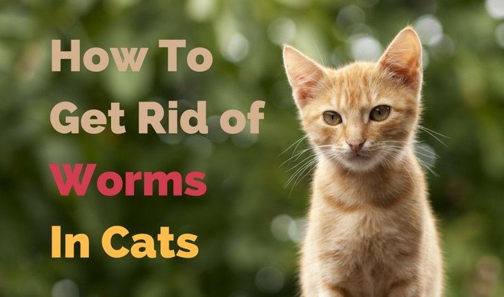 Types Worms Cats Get