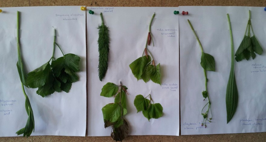 Some of the leaves in the forest garden salad