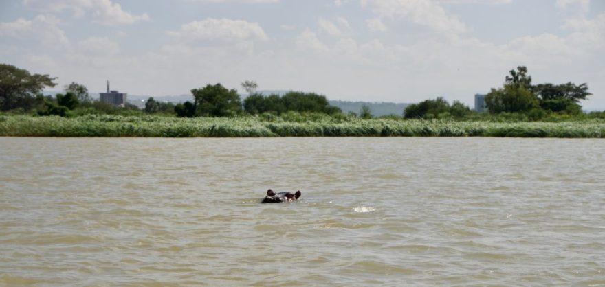 Hippo on Lake Tana