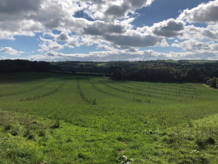 Broadlears Agroforestry site