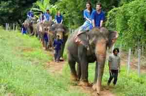 campamento de elefantes