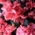 Άνοιξη και λουλούδια