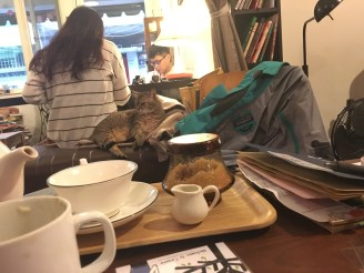 The First Cat Cafe in the World