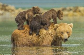 bearcubs2