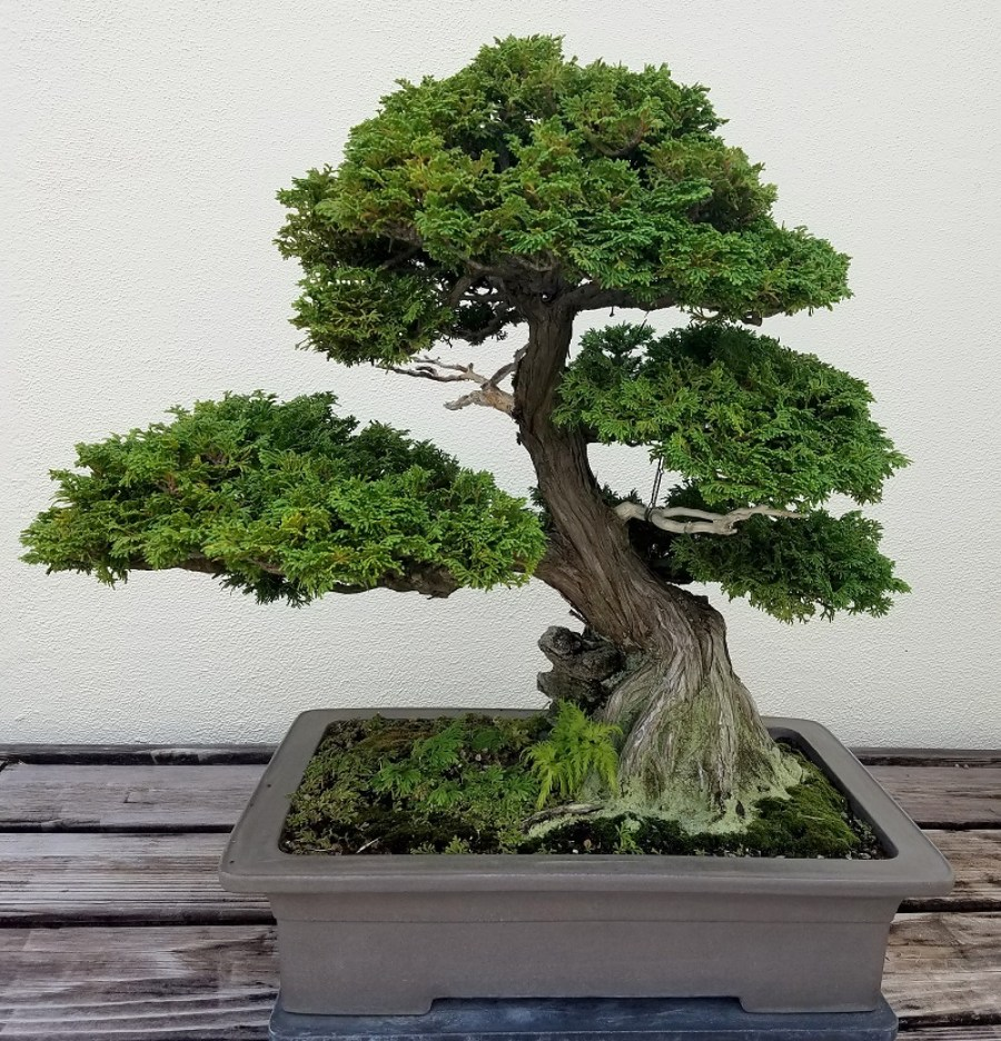 Guidelines To Choose A Suitable Bonsai Pot For Your Bonsai Tree This Lady Blogs