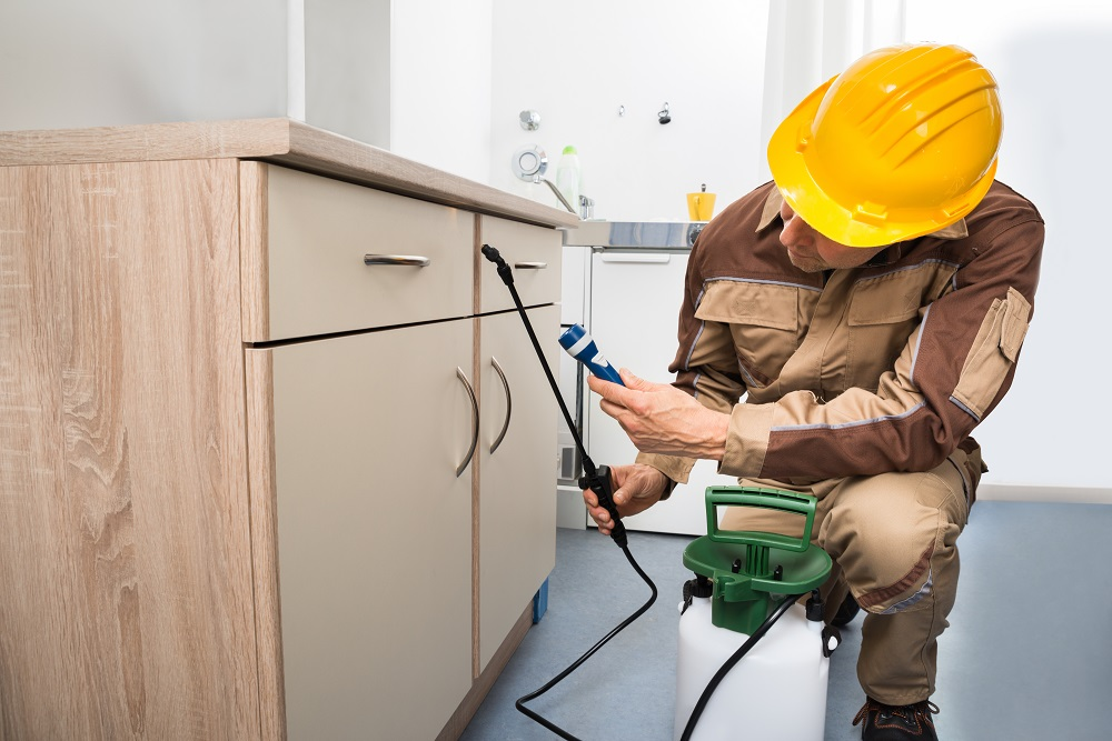 Pest Control: 6 Benefits of Hiring Professional Pest Control Services - This Lady Blogs