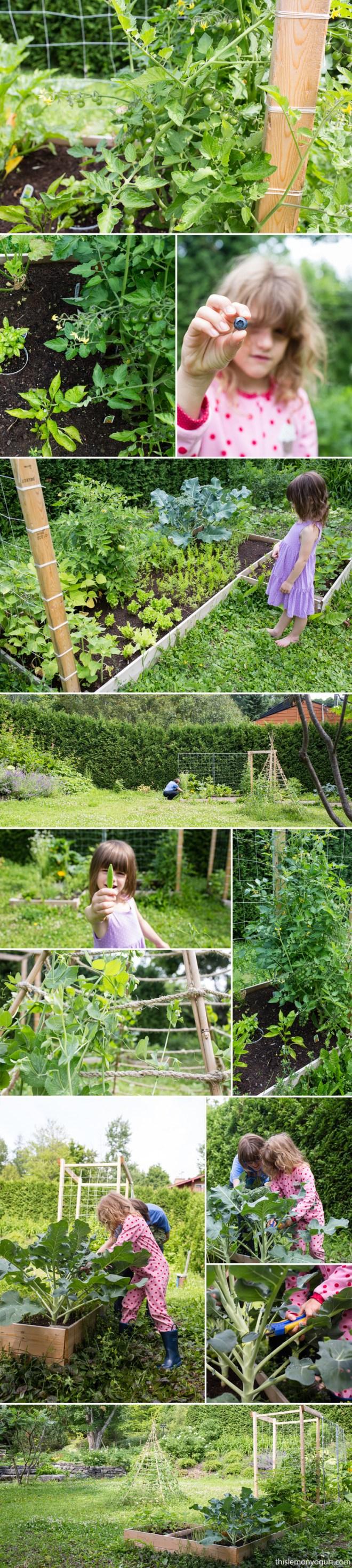 garden-08