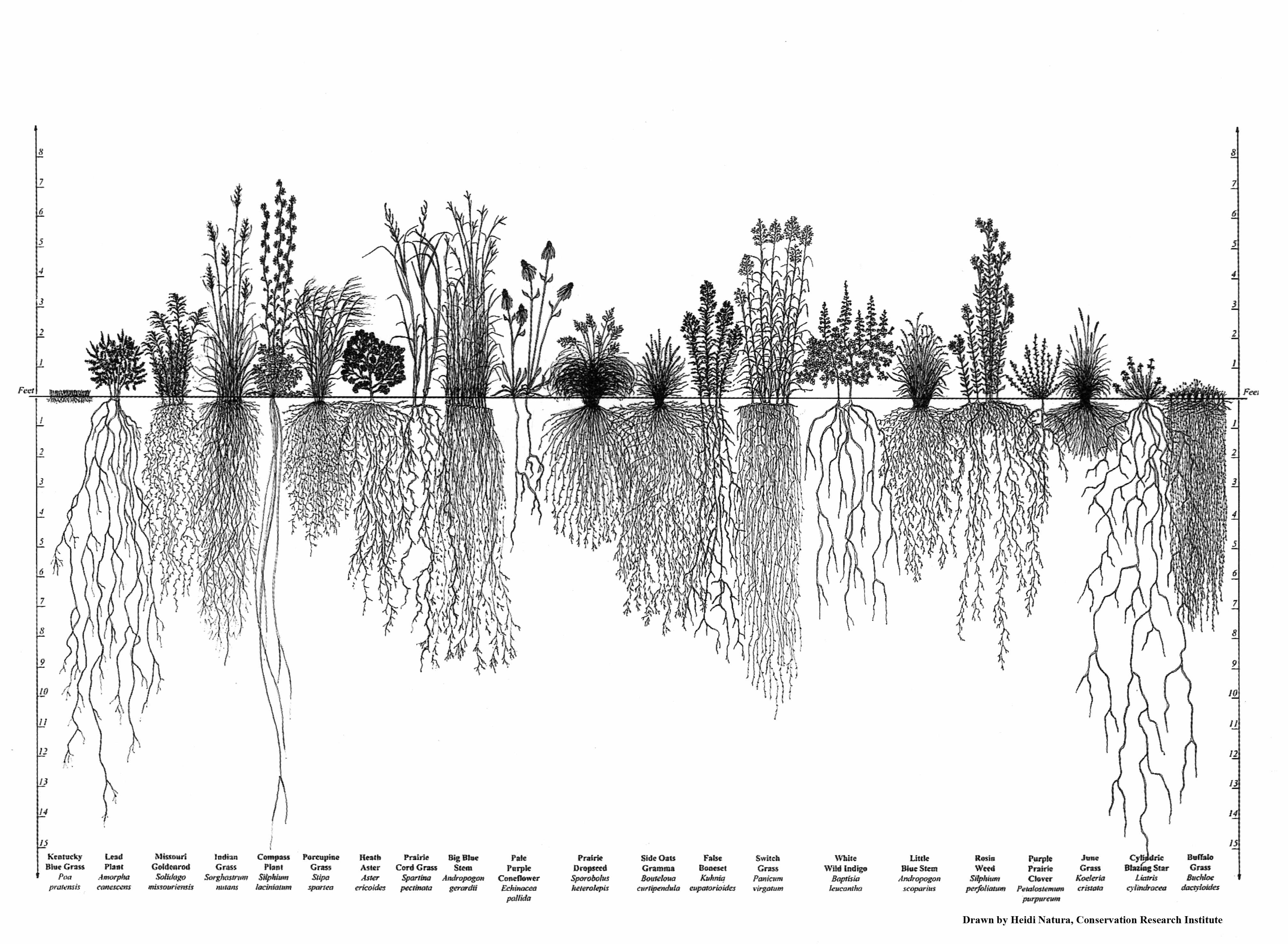 Native Grasses Archives