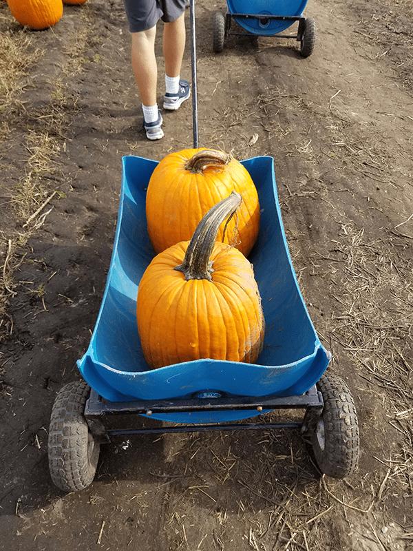 Michigan pumpkin patch
