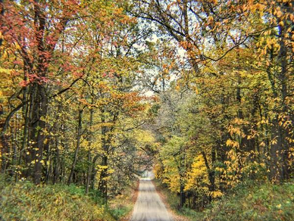 fall colors along a trail