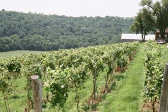 Riverwood Winery Wine Tasting