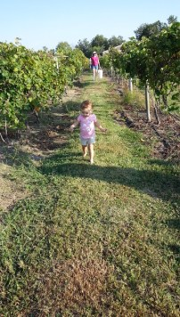 Holy-Field Kansas Winery and Vineyard