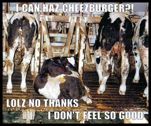factory-farming-lolz