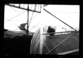 empire-pigeon-diptych