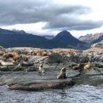 Leoni marini - isla de los lobos
