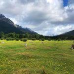 cimitero degli alberi parco tierra del fuego