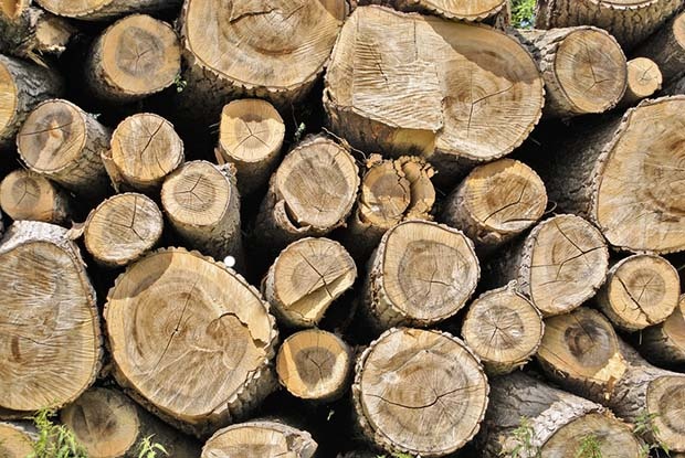 How To Preserve Logs With Bark