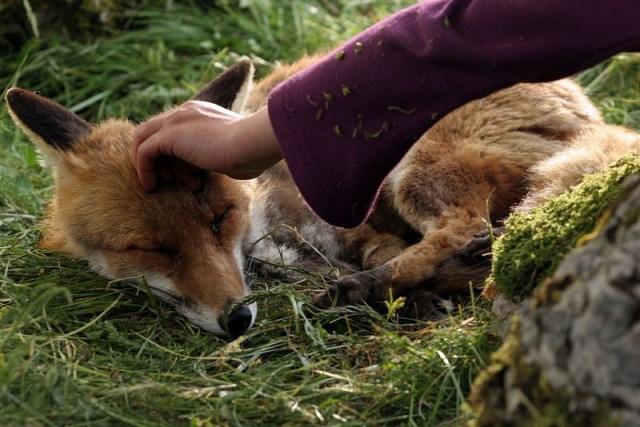 968full-the-fox-and-the-child-screenshot