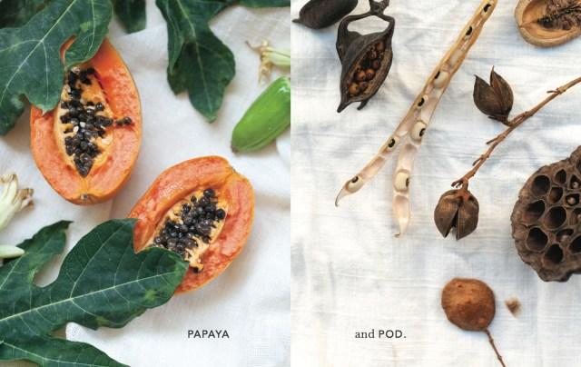 rachel_garahan_one_part_gypsy_papaya_pod