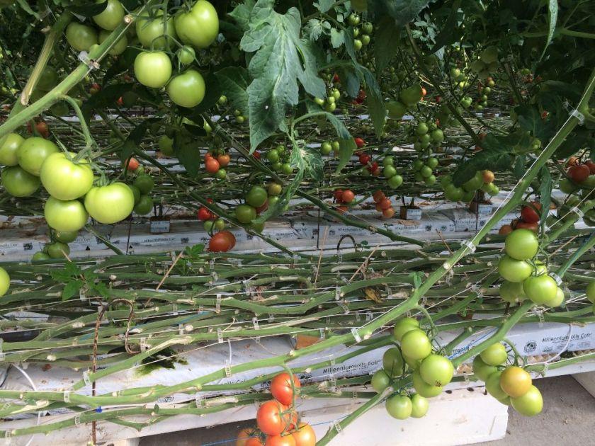 TR Greenhouses