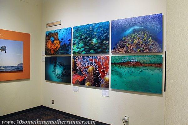 Beautiful Oceanographic Photography at Birch Aquarium