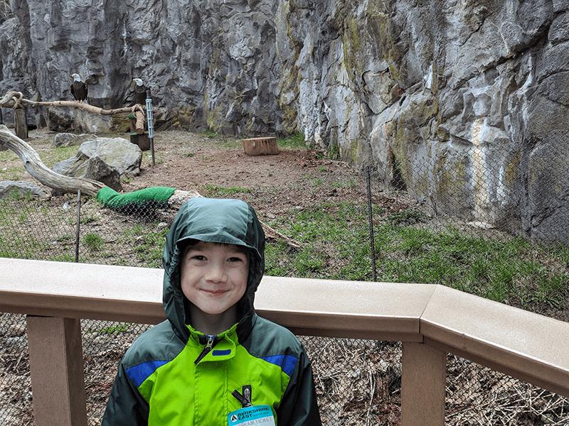 Bald Eagles at Roger Williams Park Zoo