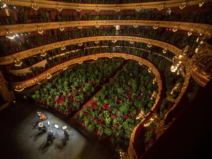 plant opera house