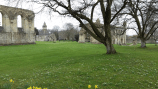 glastonbury-abbey-8