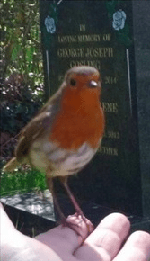 Robin at graveside