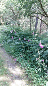 Wild flowers Gwydyr Forest Betws y Coed
