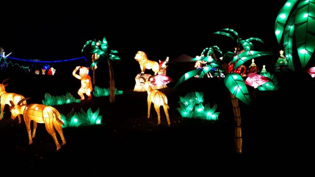 Birmingham Magic Lantern Festival - lion and monkeys in jungle setting