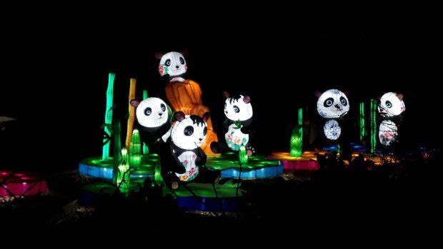 Birmingham Magic Lantern Festival - animated pandas with painted flowers on their bodies