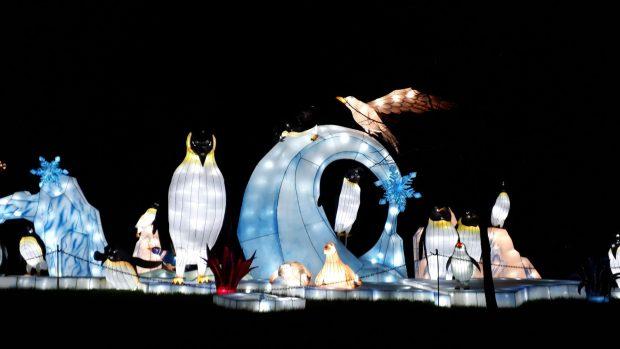 Birmingham Magic Lantern Festival - penguins and birds