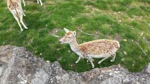 Deer at Parc de la Tête d'Or