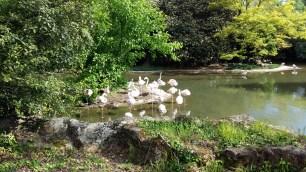 Flamingos at Parc de la Tête d'Or