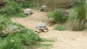 Tortoises at Parc de la Tête d'Or zoo