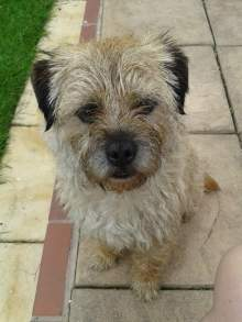Rufus dog