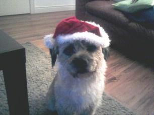 Rufus Santa hat 2