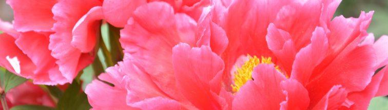 cropped-dsc_0252.jpg