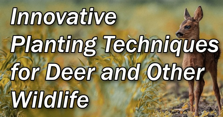 Increase Your Deer & Wildlife Population With These Innovative Planting Techniques