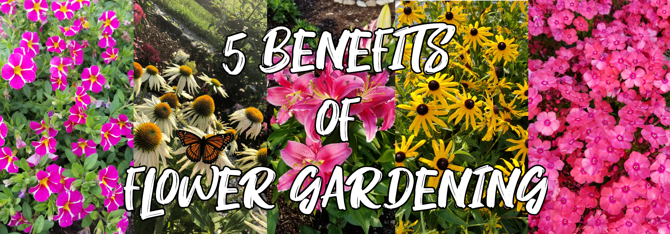 5 Benefits Of Starting A Flower Garden Thistle Downs Farm