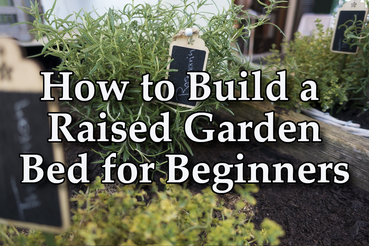 How to Build a Raised Garden Bed For Beginners - Thistle