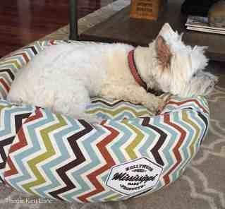 Dottie taking a nap