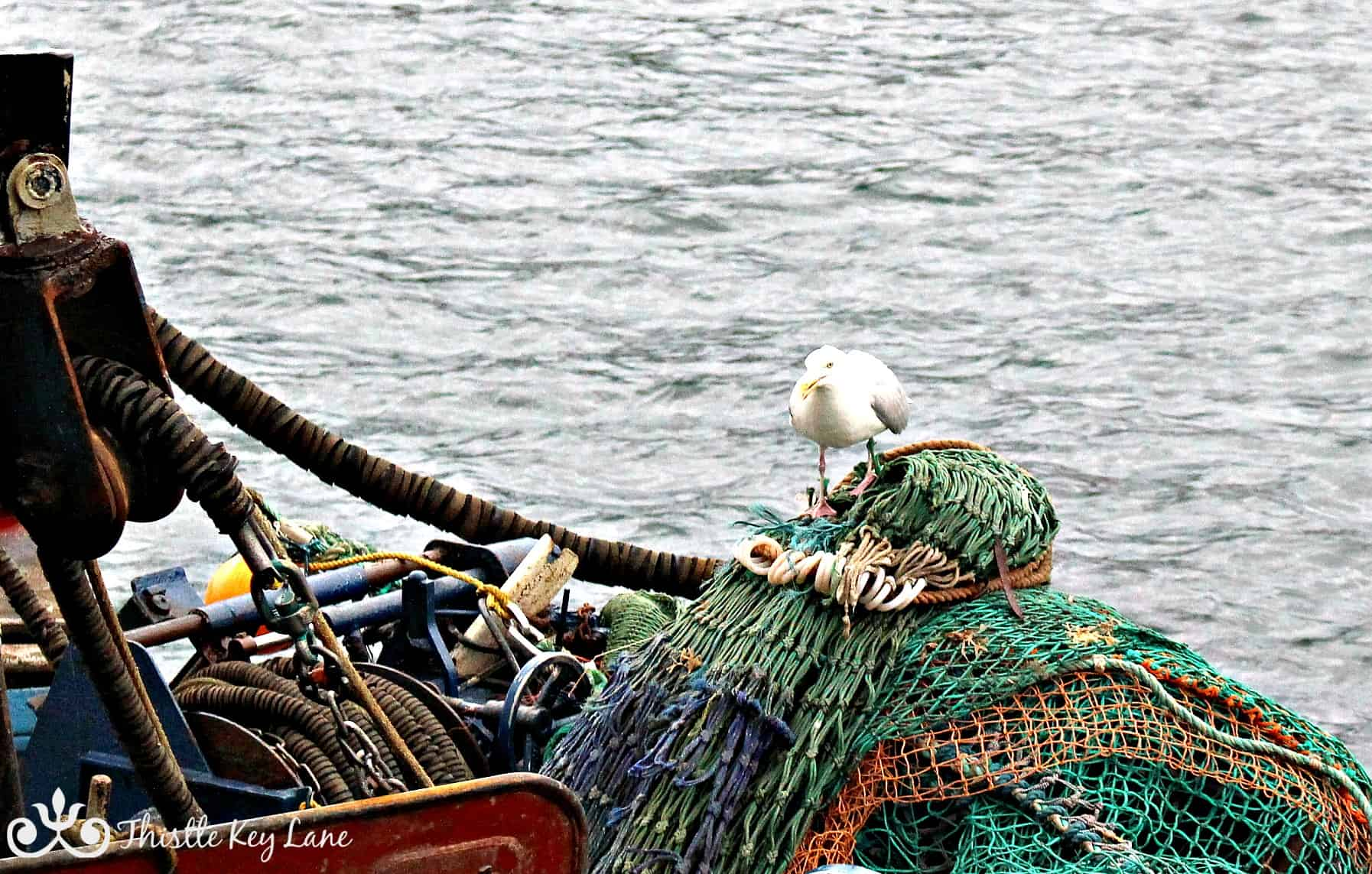 Early breakfast of leftovers in the fishing nets.