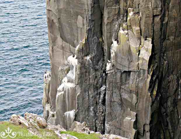 The cliffs at Neist Point
