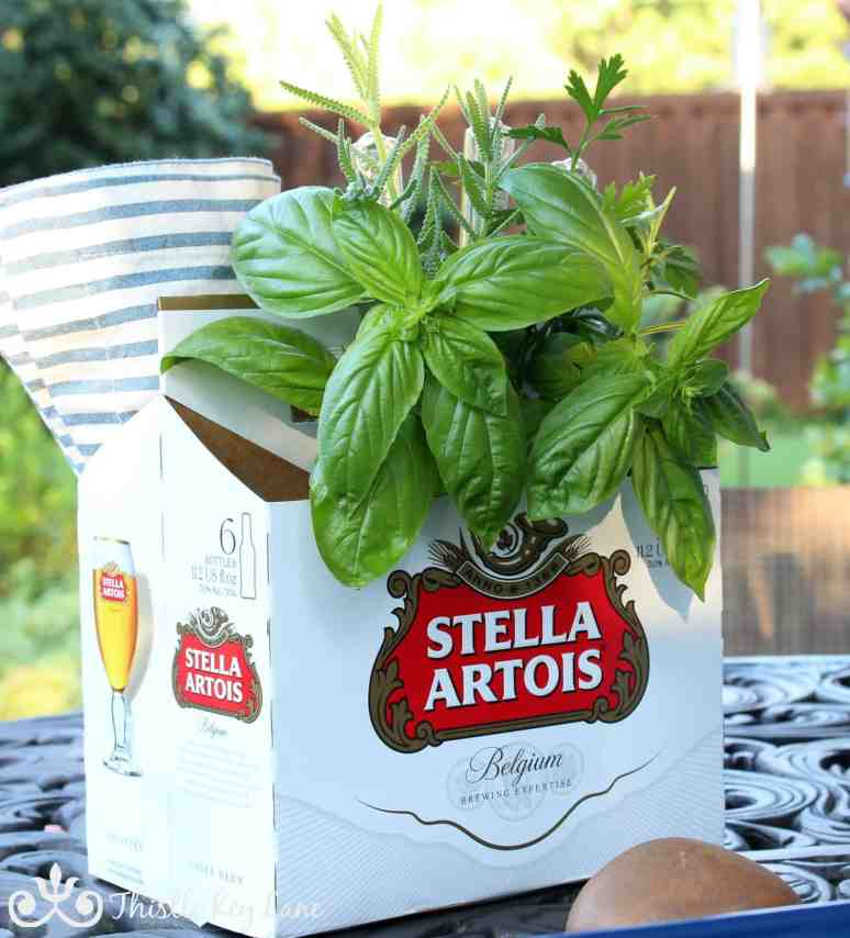 Recycled Beer Carton Holding Herbs