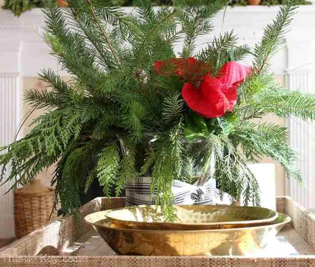Pine, cedar and a single poinsettia.