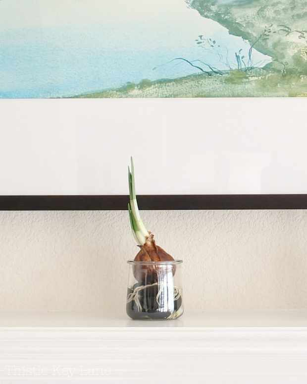 Try a variety of containers to grow bulbs
